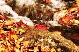 autumn-507577_1280